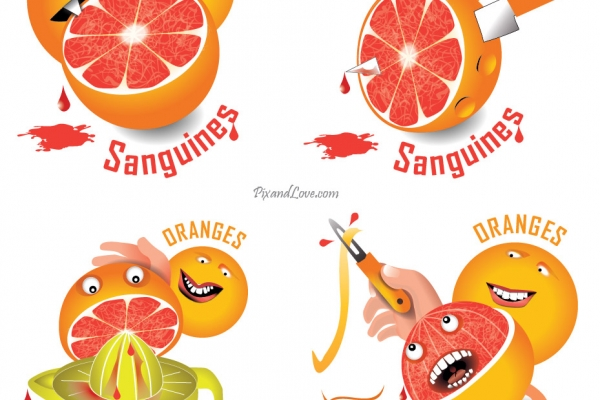 Illustration Oranges Sanguines